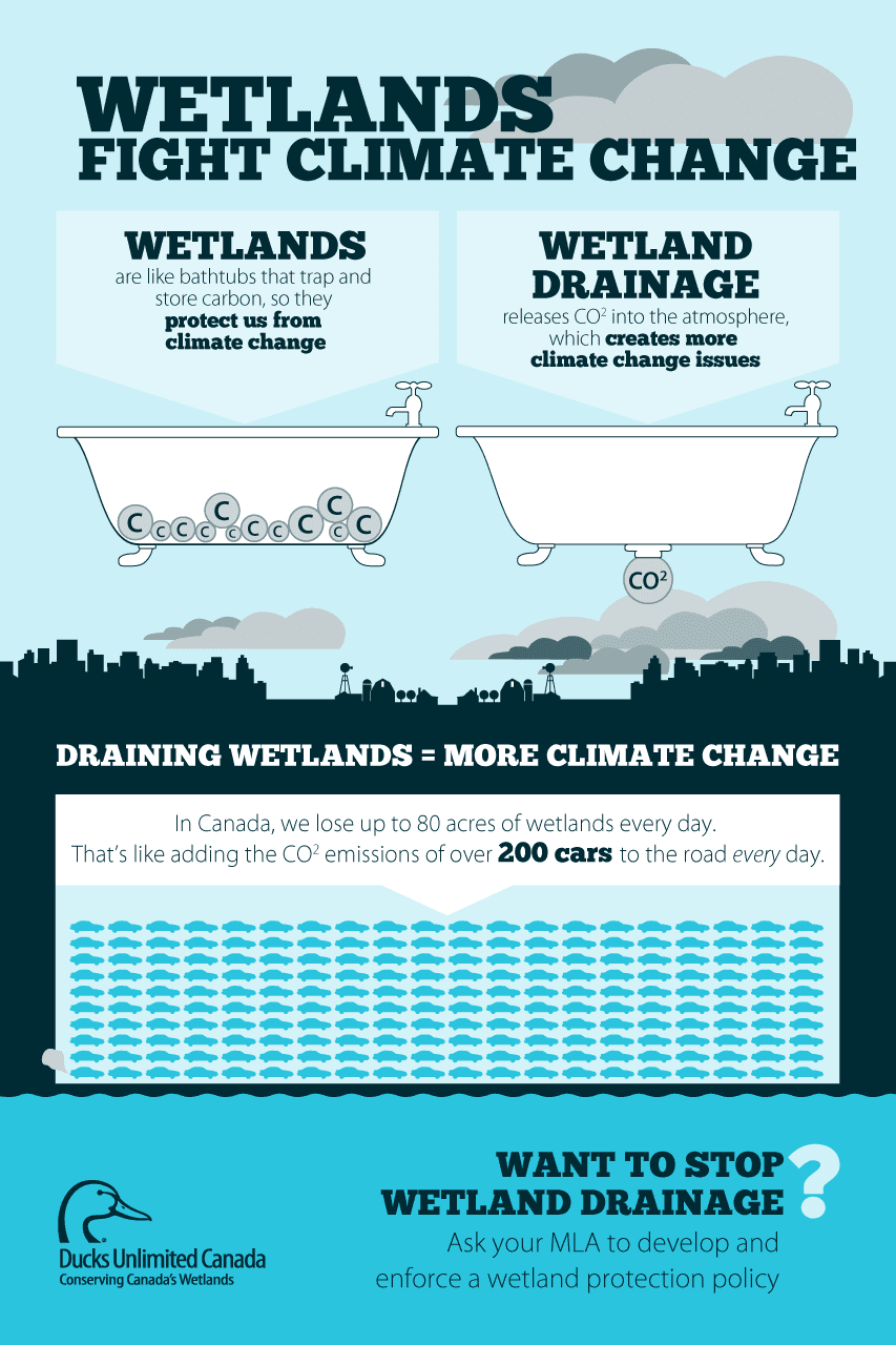 About Pipelines | Saving Canada's wetlands: A conservation group ...