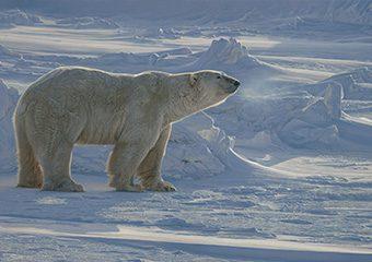 Arctic Aura