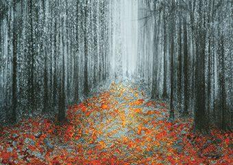 Esprit d'automne