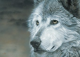 Winters Wolf