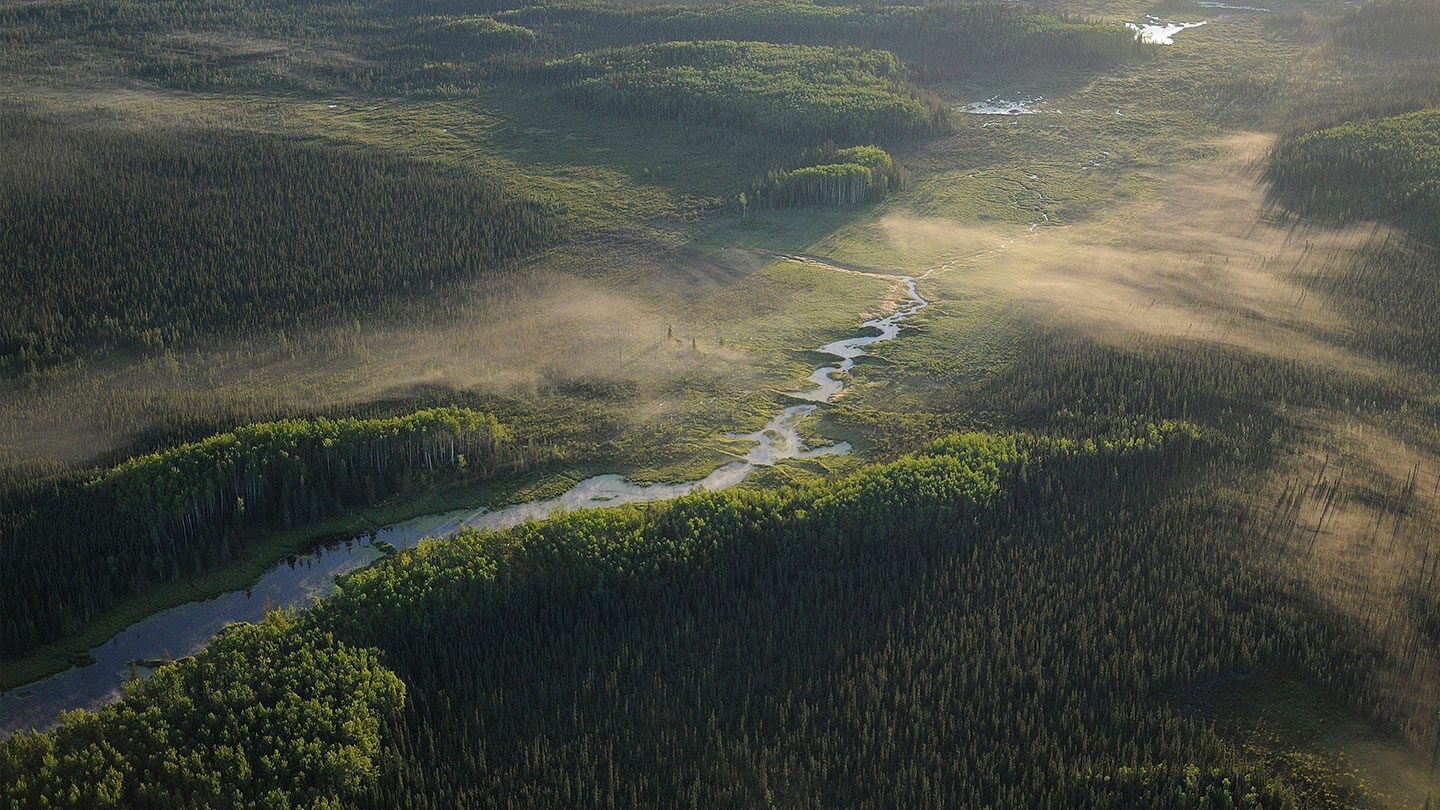 Aerial view of Boreal Forest