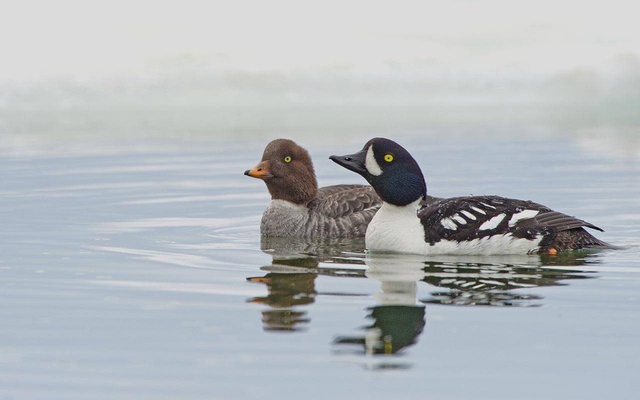 British Columbia — Ducks Unlimited Canada