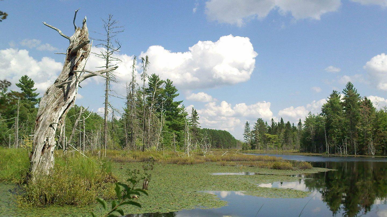 Boreal wetland in Newfoundland