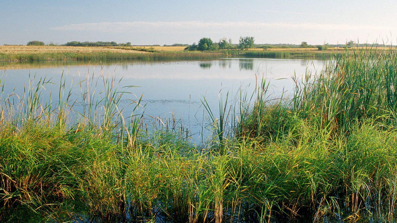 wetland in the prairies