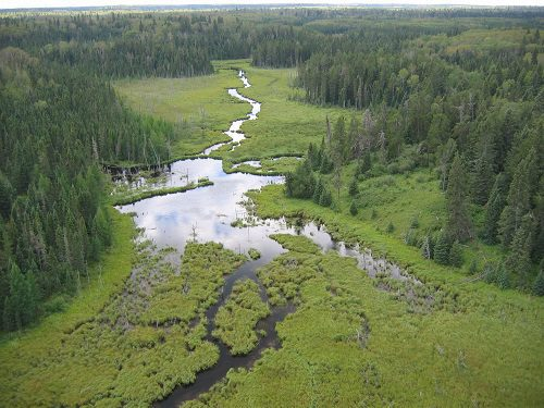 field guide of boreal wetland classes in the boreal plains ecozone
