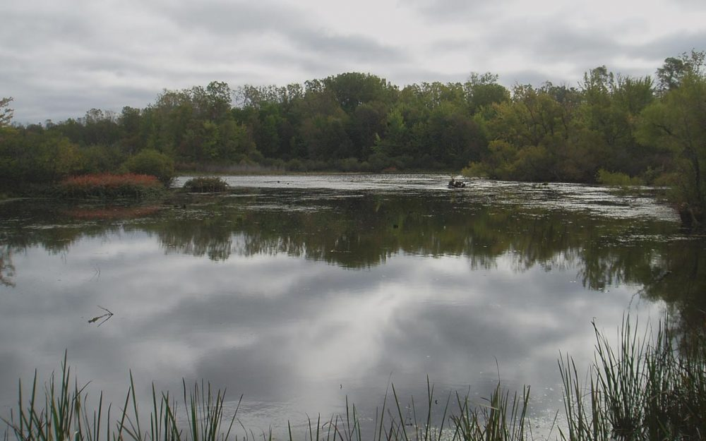 Community celebrates restoration of local wetland gem