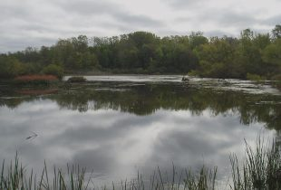 Community celebrates restoration of local wetland gem