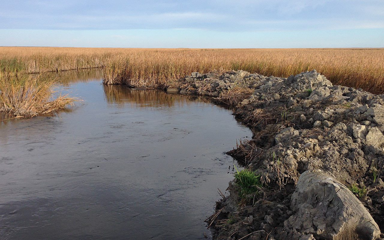 Illegal drainage threatens iconic Big Grass Marsh in Manitoba