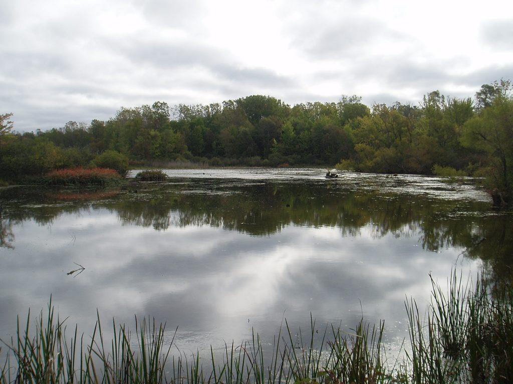 Calton Swamp