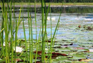 Pond Press