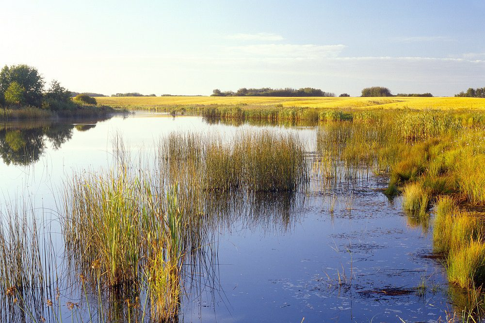 discuss two solutions for protecting and restoring wetlands The ongoing development of statewide strategies for protecting and restoring wetlands in colorado  two levels of epa ecoregions, and general land ownershi p .