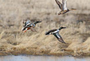 Wetland Restoration Lease Program