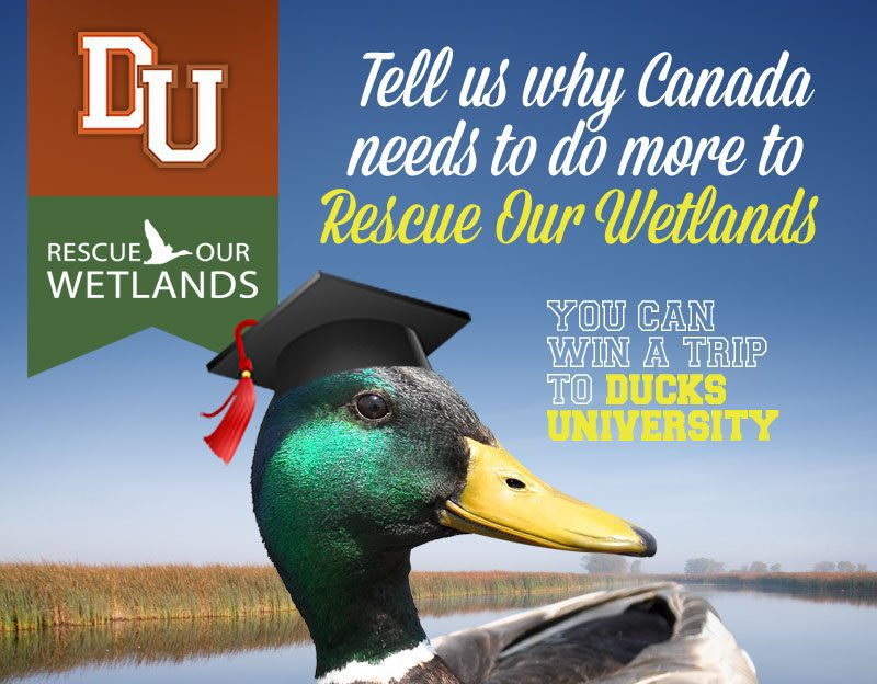 Win a trip to Ducks University
