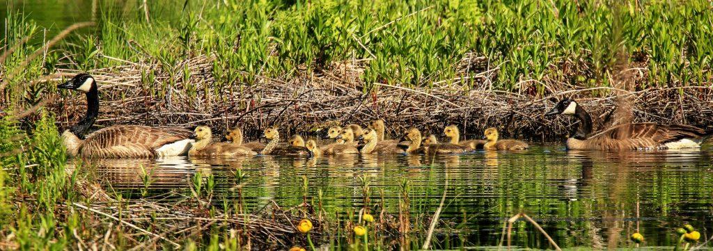 Wildlife at a Verona area wetland