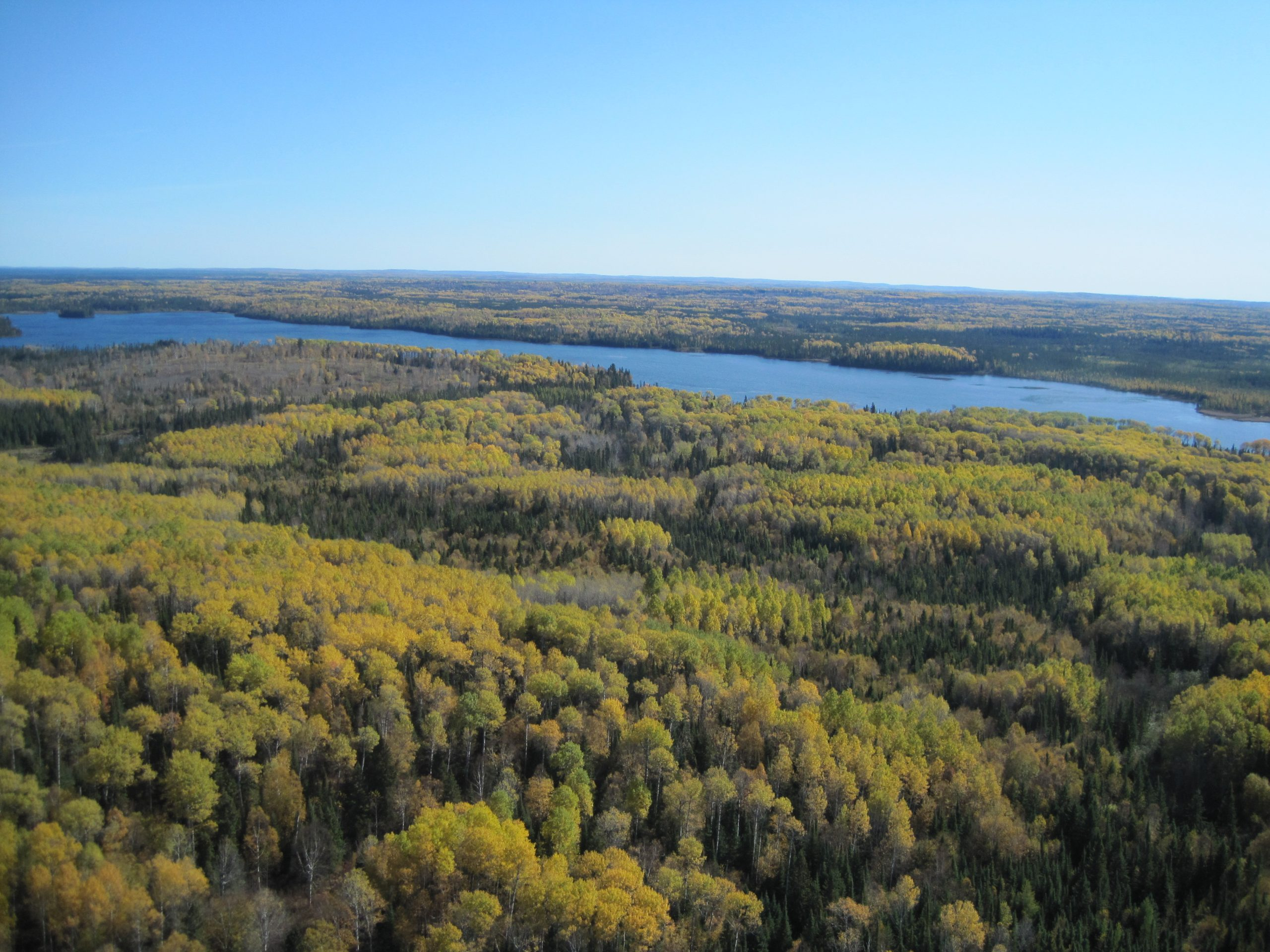 Managing forests that conserve wetlands and water quality