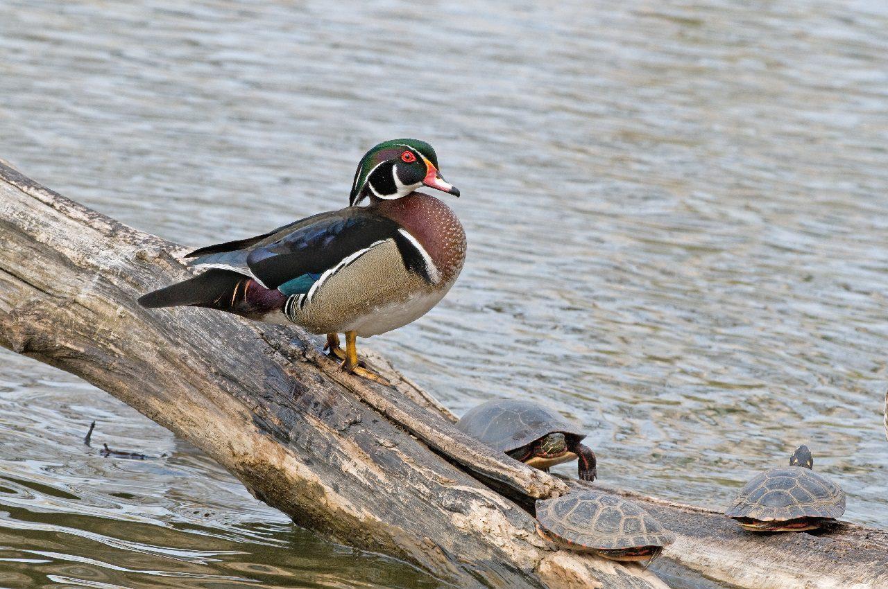 Bird conservation in the spotlight