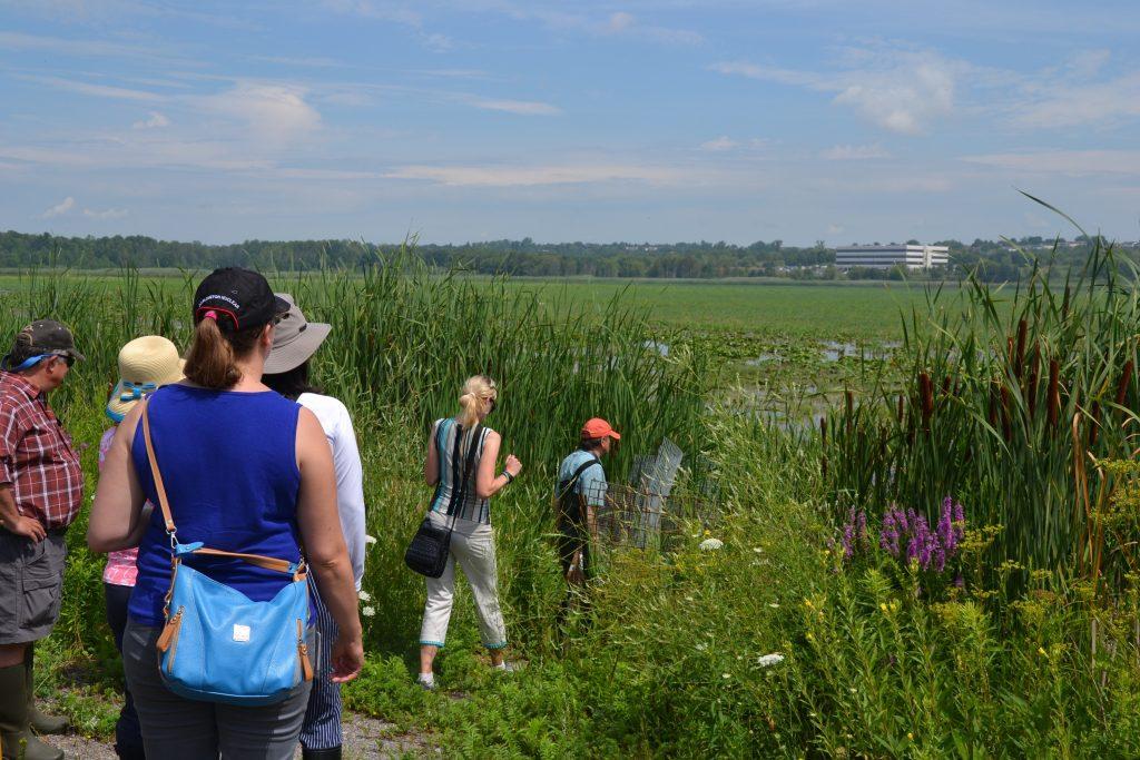 OPG volunteers headed into the marsh