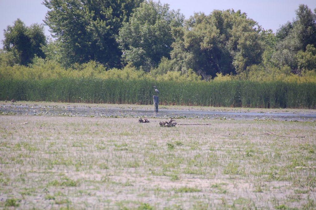 Bird at Oshawa Second Marsh