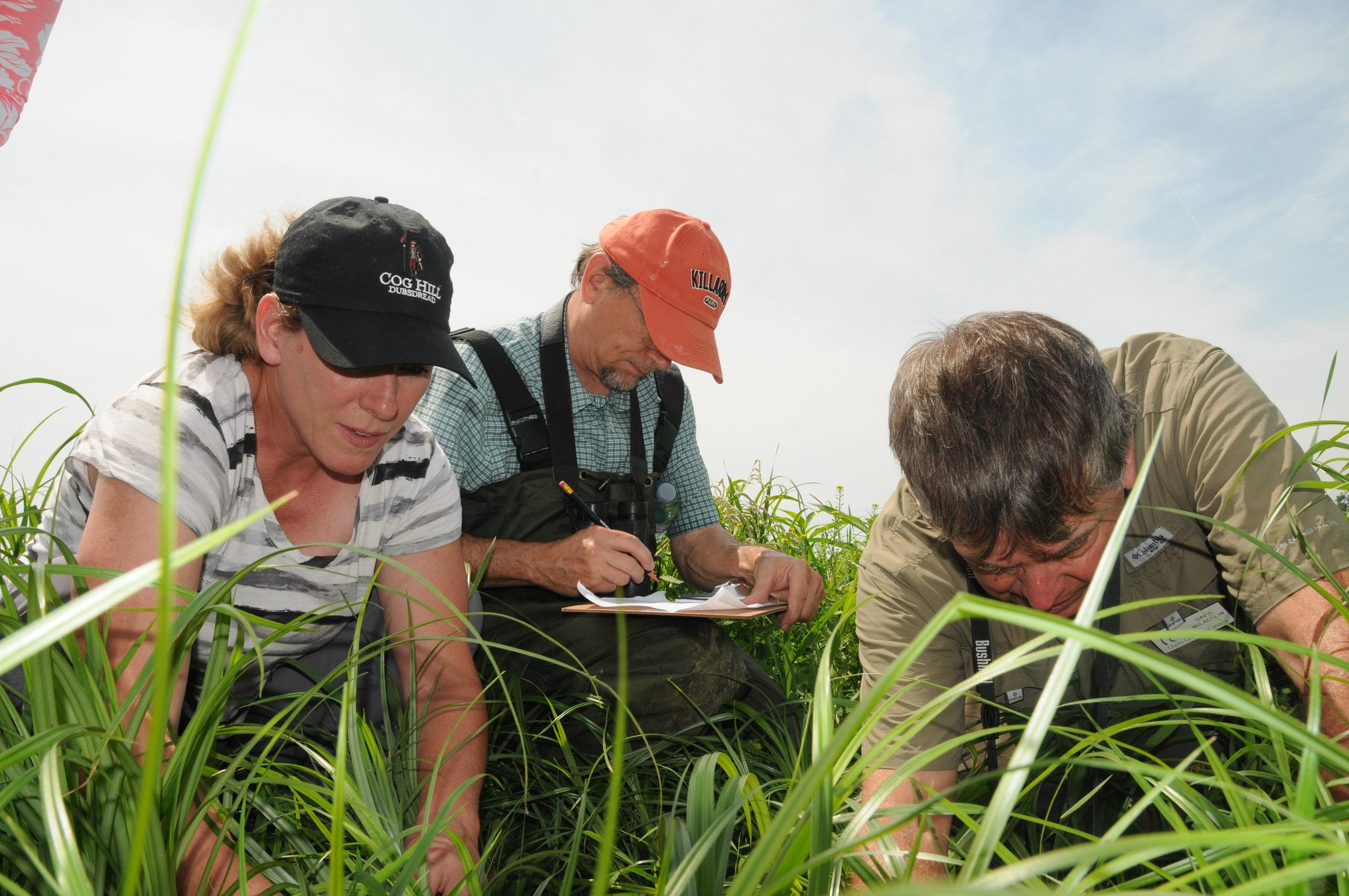 An up-close look at wetland success