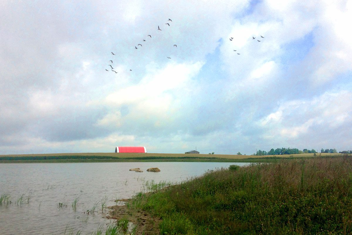 A flock of geese flying overhead has become a common occurrence at the Troubridges newly constructed wetland.