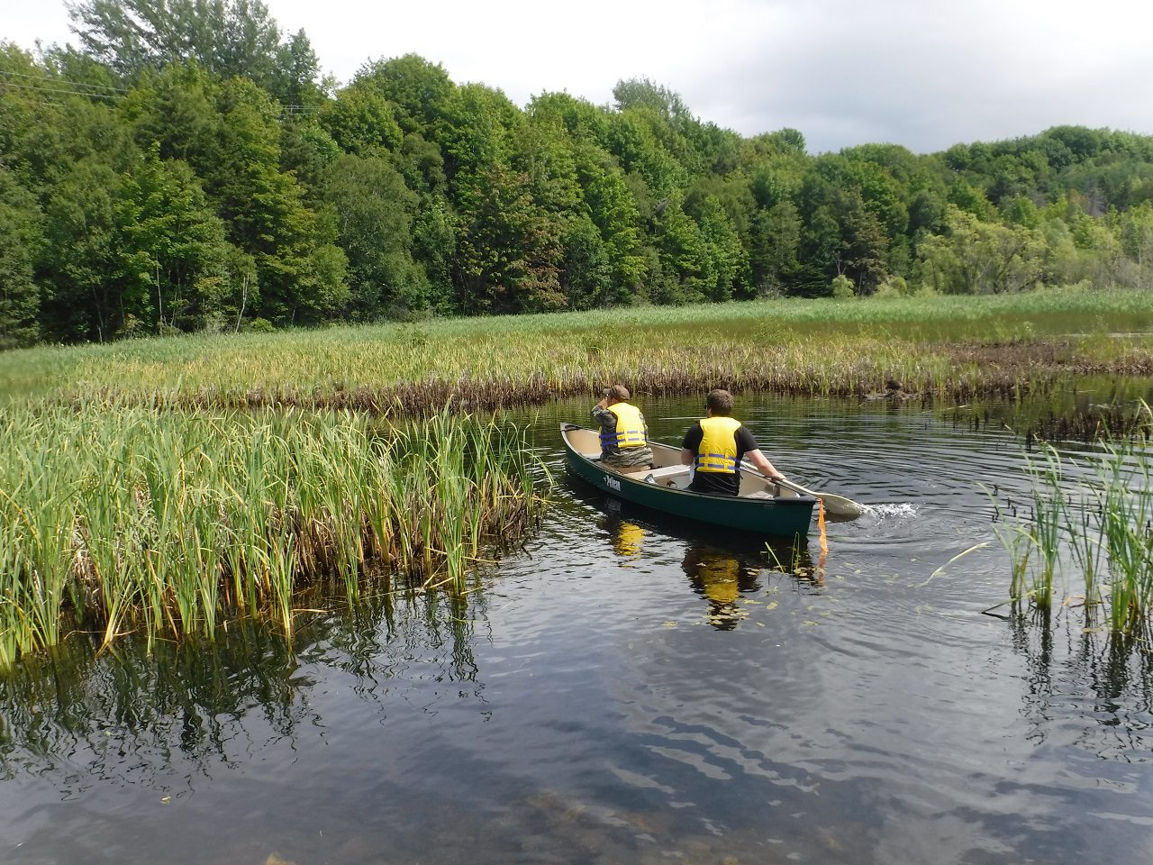 Purple loosestrife removal