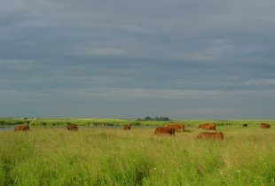 Alberta Hay and Graze Tender Program