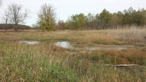 Minesing wetland