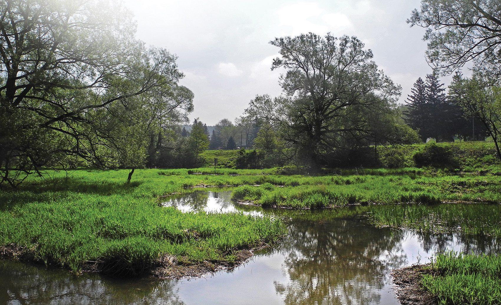 Investing in wetlands