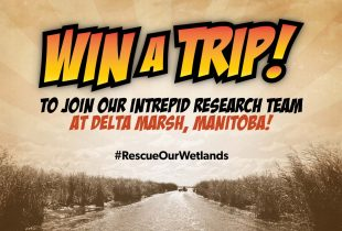 Don your cape (and waders) and #RescueOurWetlands