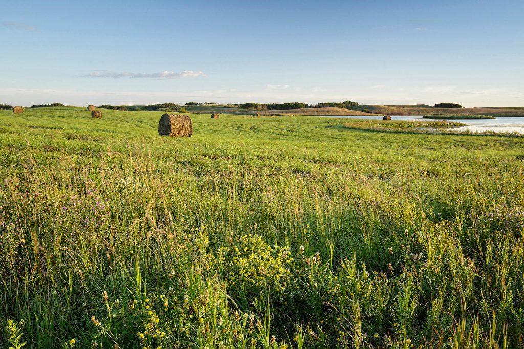 Allan Hills farmer's field
