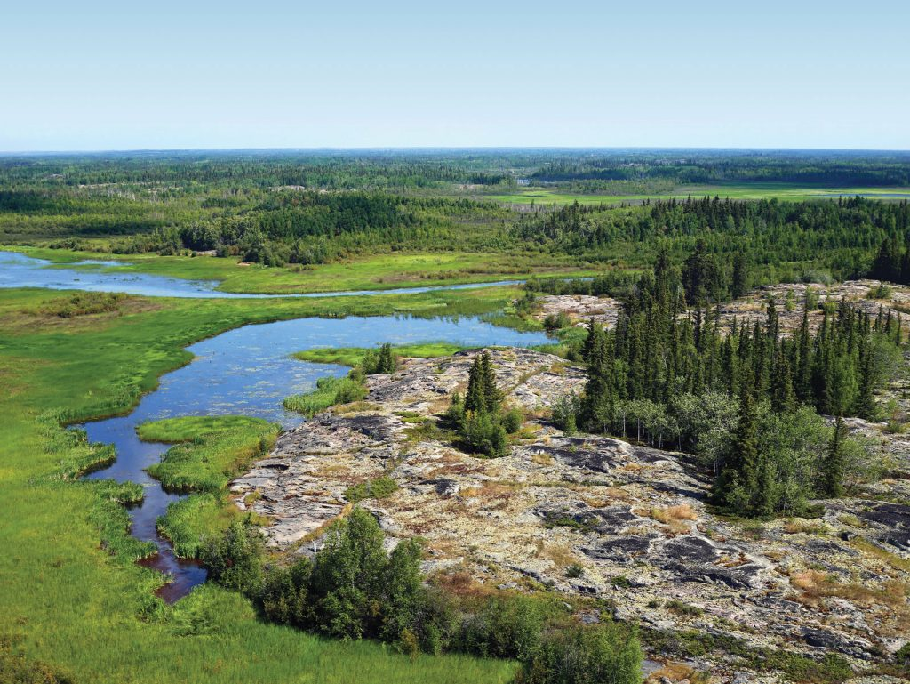 conservation in the boreal forest