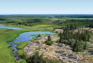 Bird's eye view of the boreal