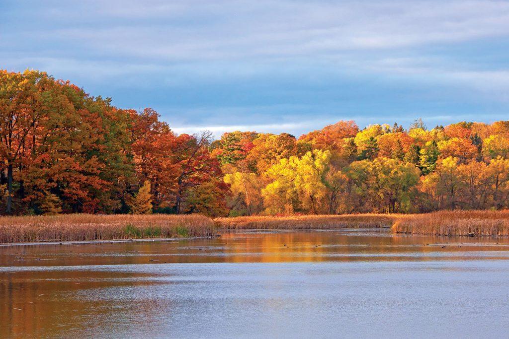 conservation of quebec wetlands