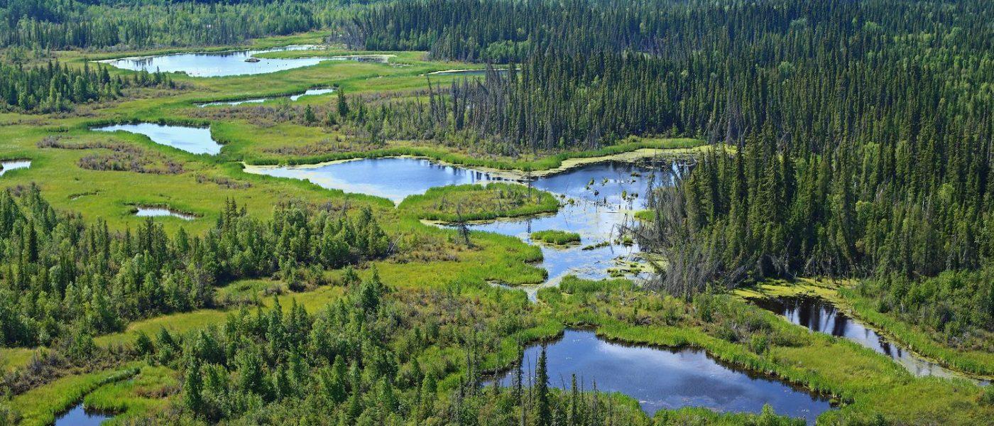 Boreal wetlands