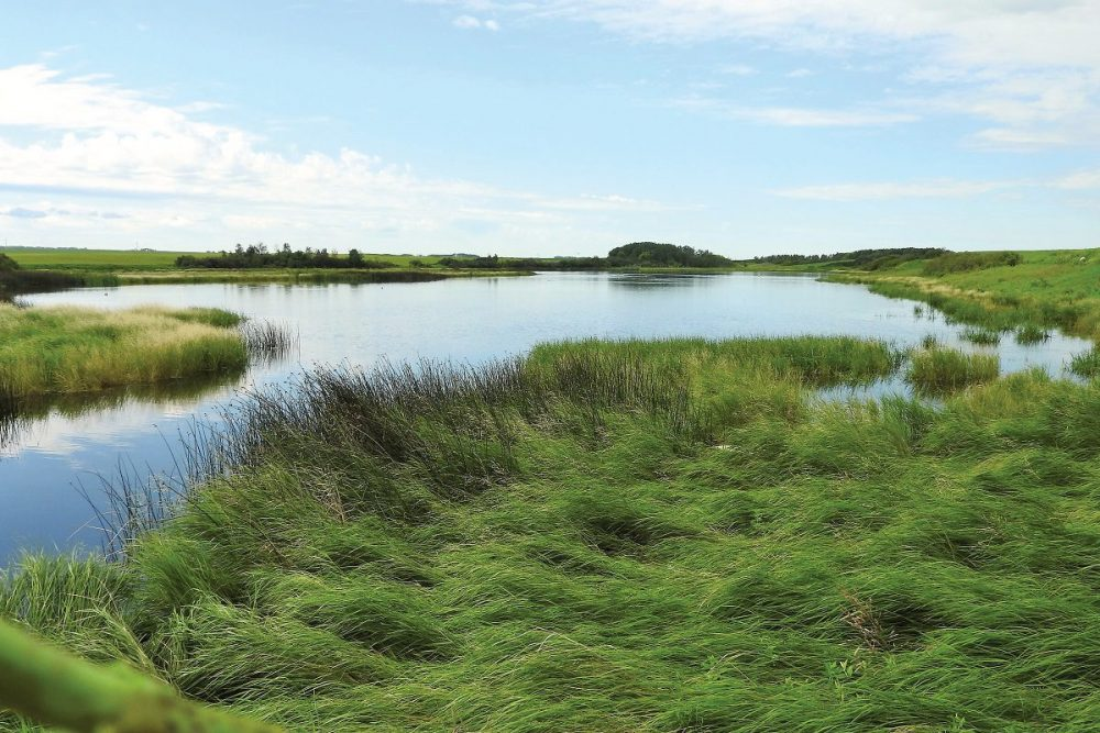 Ducks Unlimited Canada urges federal government to invest in natural areas in Budget 2018