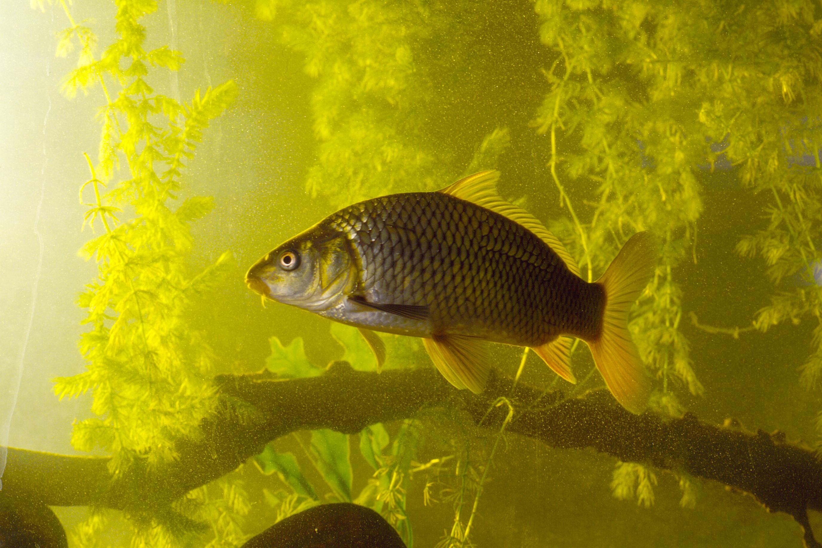 National Invasive Species Awareness Week