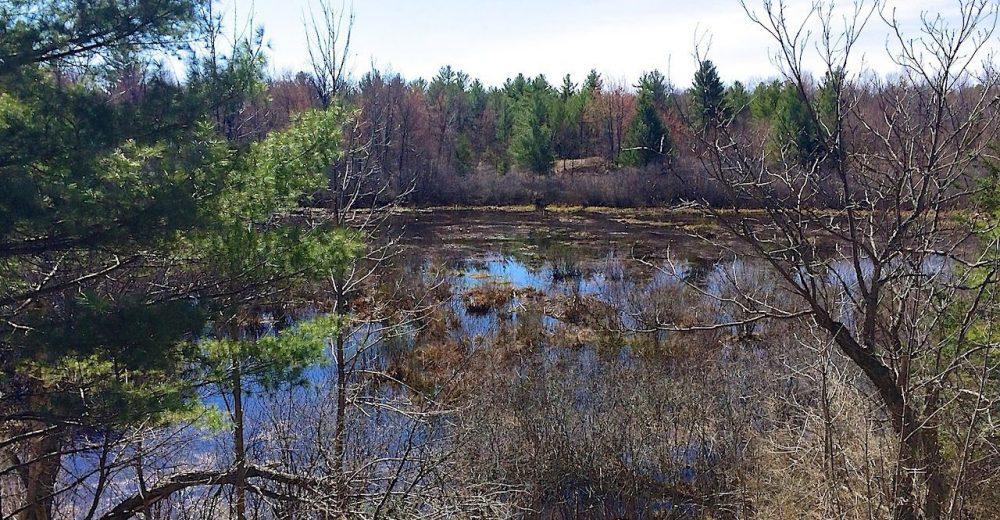 Carp Hills wetlands.