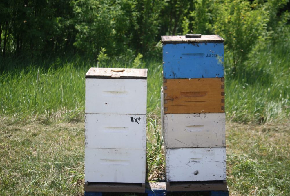 The Gottseligs aim to have 200 hives by 2020.