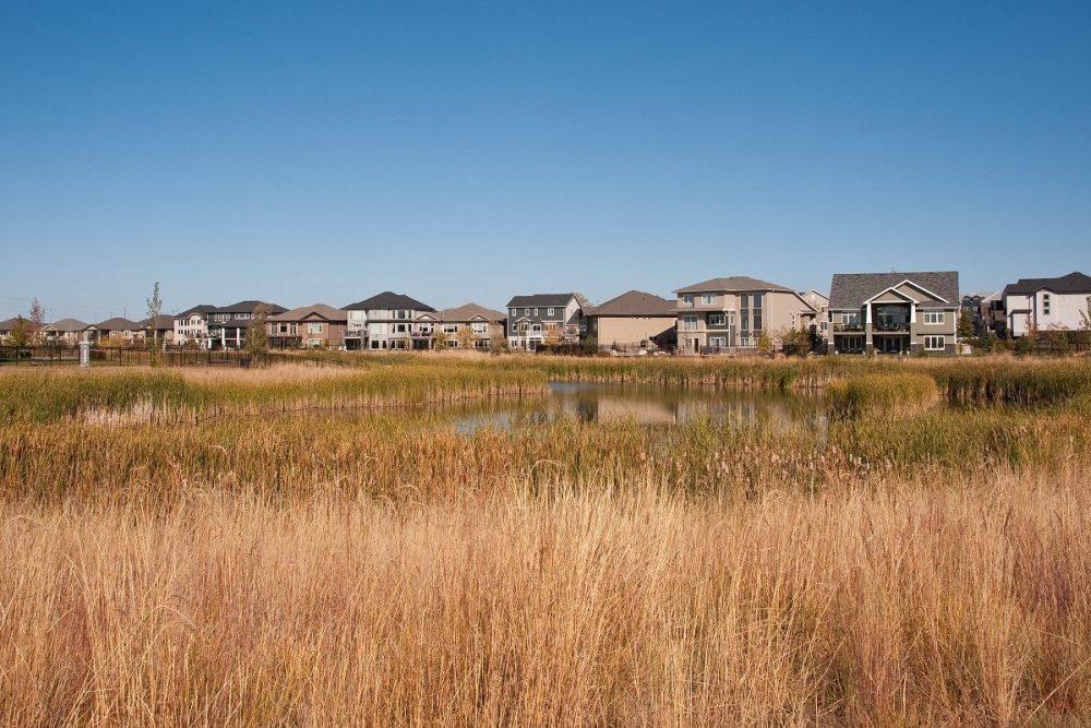 Naturalized wetland near an urban neighbourhood.