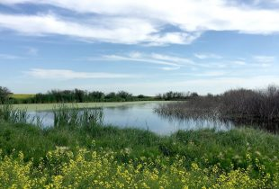 Wetlands protected as landmark conservation bill receives royal assent