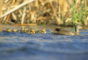 Wetlands, partnerships critical to keeping migratory birds part of our lives