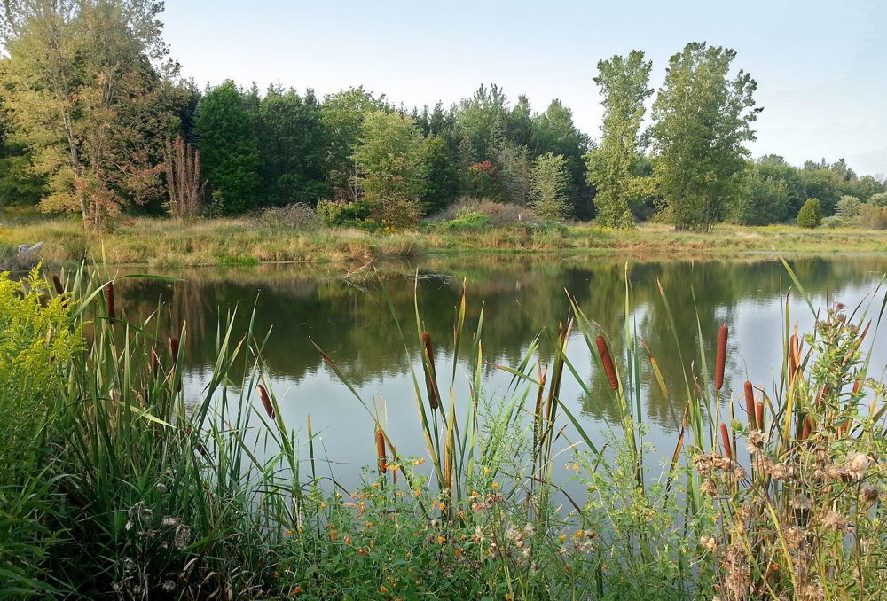 A landscape with ample small wetlands can sustain generations of wildlife.