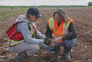 Researching peatlands for restoration