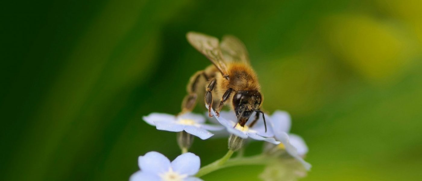 DUC Podcast Episode 16: Of Potholes and Pollinators