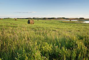 Ducks Unlimited Canada supports and celebrates Canadian agriculture