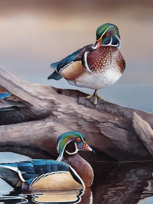 Waterfowl Stamp and Print Artist