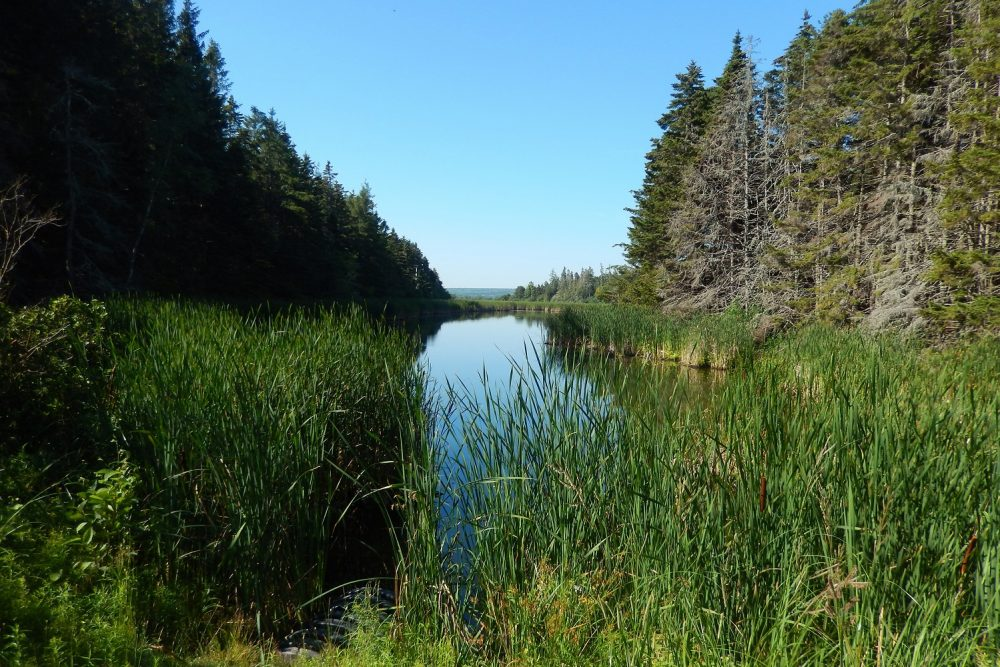 DUC will be in charge of upgrading dykes and water control structures and will jointly manage wetlands to ensure quality habitat for migratory birds including waterfowl, at-risk species, and other wildlife in Chignecto NWA (NS).