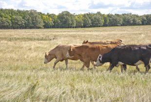 Forage program offers farmers a financial break