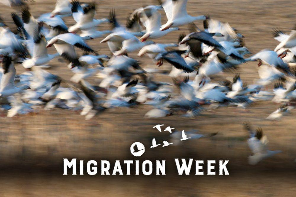 Fall Migration Week takes flight