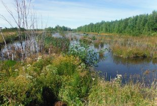 Protecting our home and native wetland